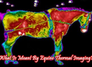 what-is-meant-by-equine-thermal-imaging