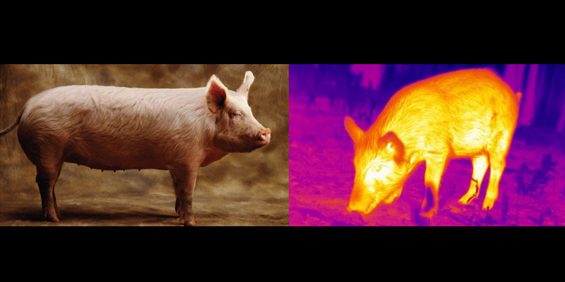 normal camera vs thermal camera