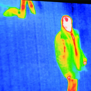 thermal camera picture 1