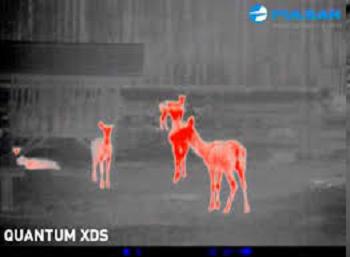 Pulsal Quantum XD50S Thermal Monocular