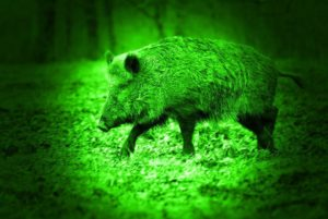 night vision hog magnification